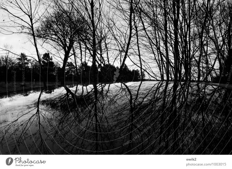 Sky Nature Plant White Tree Landscape Calm Winter Black Forest Environment Gray Horizon Glittering Car Gloomy