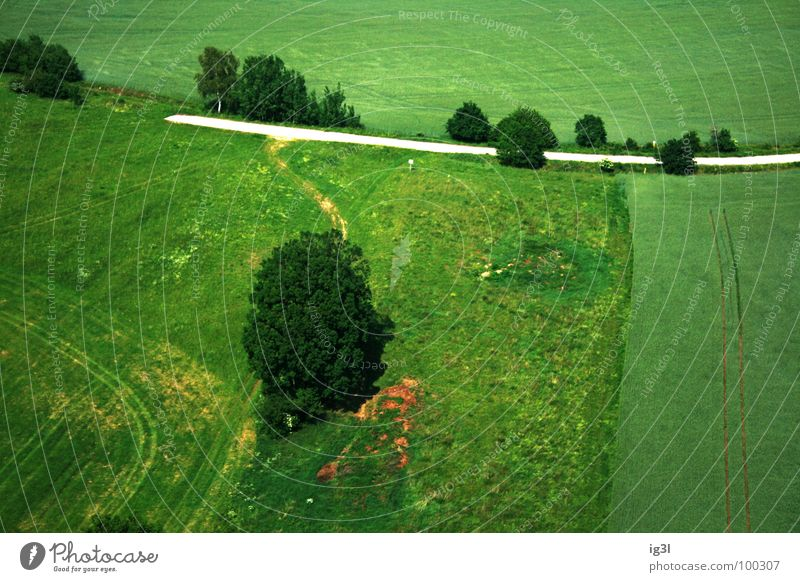 who's gone into nowhere Gravel path Tree Field Target Summer Seasons Spring Jump Meadow Flat Pattern Green Bird's-eye view Under Places Arable land Feed