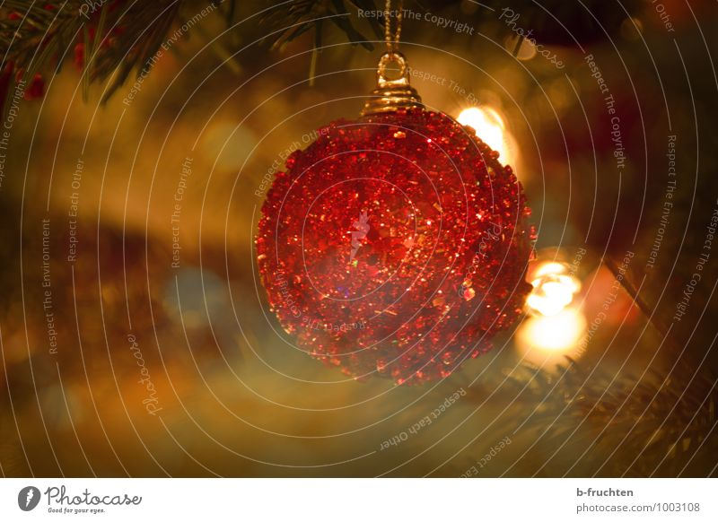 glitter ball Elegant Christmas & Advent Tree Eroticism Red Emotions Glitter Ball Jewellery Christmas tree Christmas decoration Colour photo Copy Space left