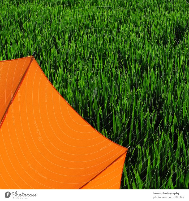 Cut Cloppenburg Umbrella Sunshade Storm Clouds Grass Blade of grass Meadow Field Green Spring Summer Relaxation Sunbathing Flower meadow Environment Summery