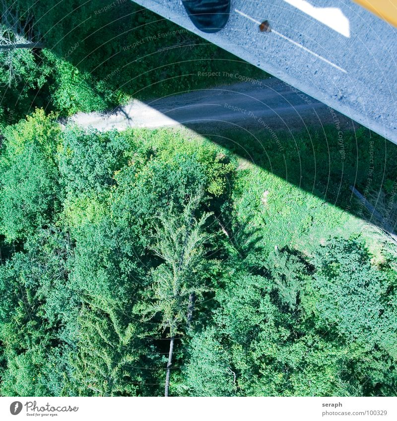 Base Jumping Air Tree Forest edge Treetop Fir tree Coniferous forest Meadow Larch Concrete Asphalt Dangerous Risk Reckless Fear Fear of heights Fear of flying