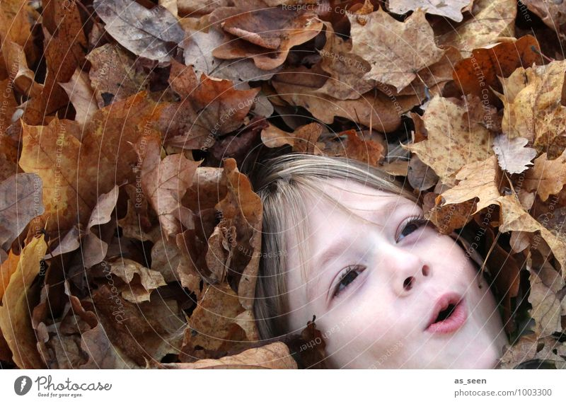 leaf bath Boy (child) Infancy Life Face 1 Human being 8 - 13 years Child Environment Nature Plant Autumn Leaf Deciduous forest Autumn leaves Hair and hairstyles