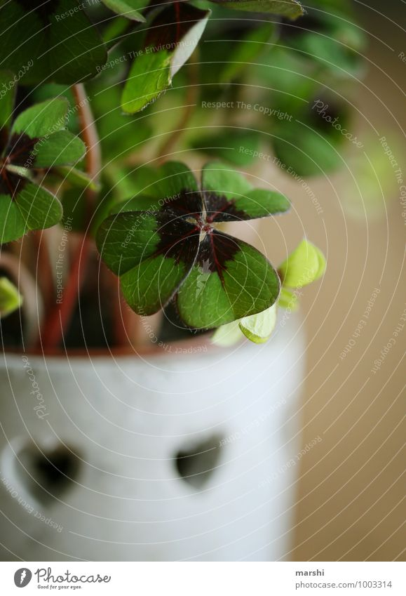 Happiness for 2015 Plant Leaf Moody Clover Cloverleaf Happy Good luck charm New Year's Eve Blur Foliage plant Green Colour photo Close-up Detail