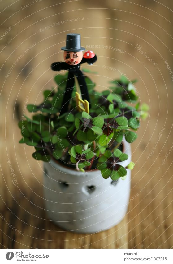 lucky clover Plant Sign Emotions Moody Happy Clover Cloverleaf Chimney sweep Wooden table Symbols and metaphors New Year's Eve Desire Good luck charm