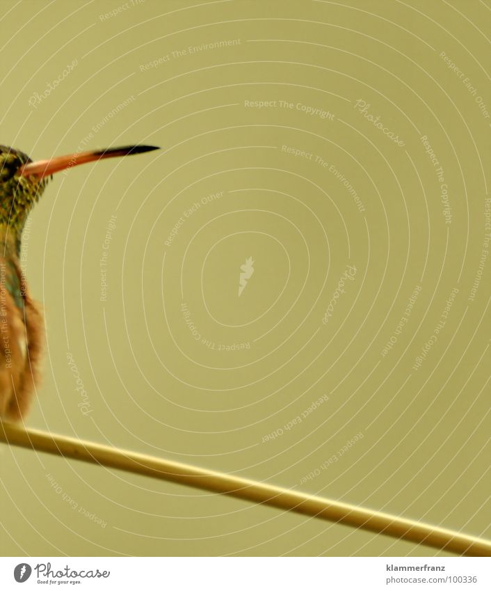Black Animal Yellow Jump Freedom Brown Power Orange Bird Success Free Aviation Corner Zoo Brave Wooden board