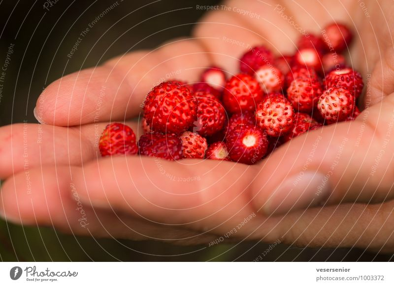 mmmmmmh... Fruit Nutrition Healthy Eating Hand Fingers Delicious Sweet Contentment Anticipation Success To enjoy Wellness Wild strawberry Colour photo Close-up