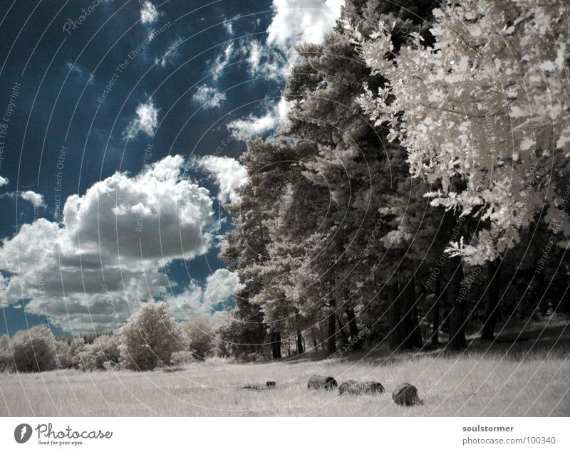Sky White Tree Blue Red Black Clouds Forest Meadow Grass Dream Lanes & trails Think Funny To go for a walk Tracks