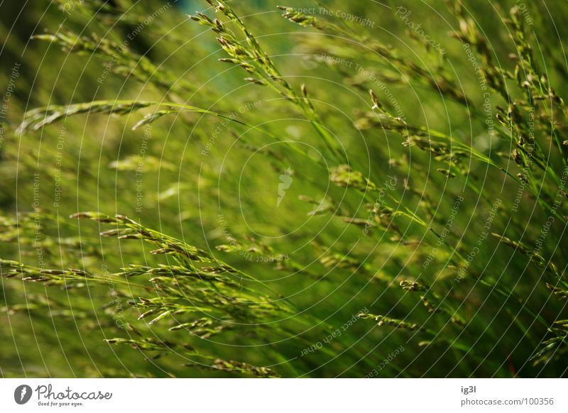 Nature Green Summer Relaxation Calm Joy Dark Environment Spring Meadow Grass Line Bright Jump Contentment Energy industry