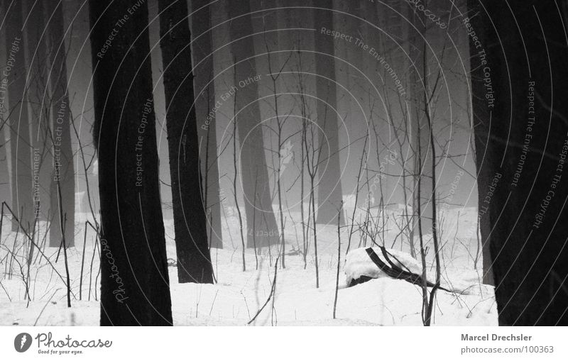 White Tree Winter Black Calm Forest Snow Mountain Gray Fear Fog Bushes Branch Creepy Fir tree Tree trunk