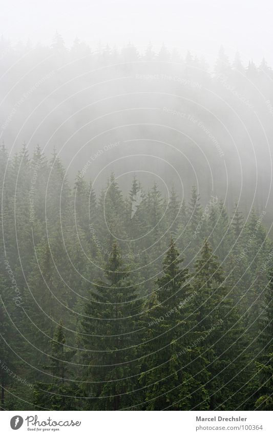 Summer in the Ore Mountains Tree Dark Creepy Harrowing Fog Ghosts & Spectres  Gray White Bushes Forest Fir tree Spruce Calm Tree bark Erz Mountains Drizzle