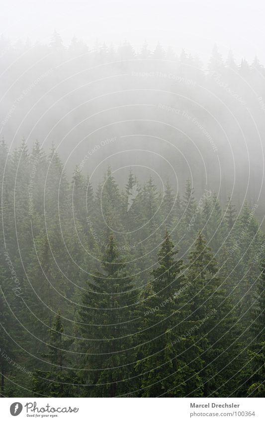White Tree Calm Forest Dark Mountain Gray Fear Fog Bushes Grief Branch Creepy Fir tree Tree trunk Treetop