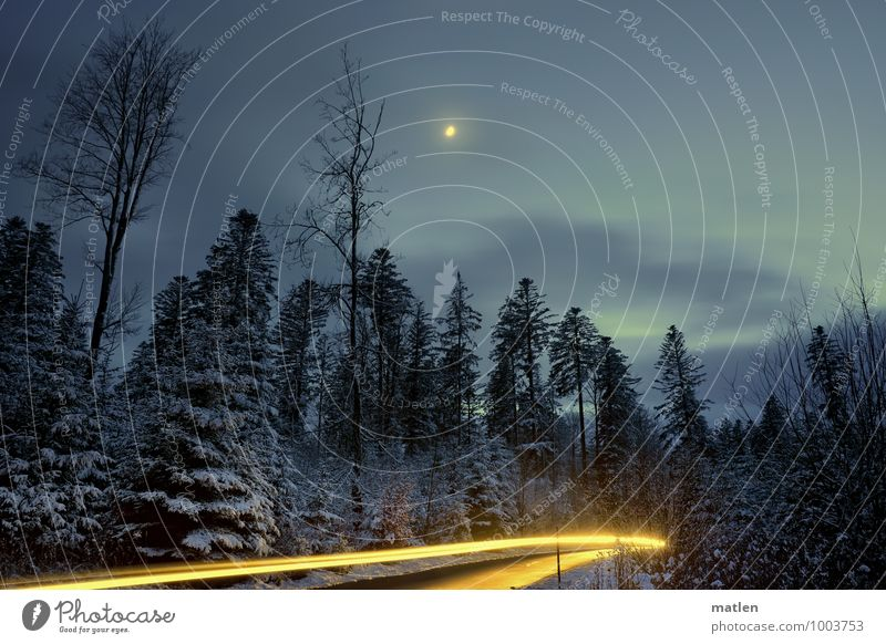 Extraordinary I Winter night's dream Nature Landscape Plant Sky Clouds Night sky Moon Weather Beautiful weather Ice Frost Snow Tree Forest Deserted Motoring