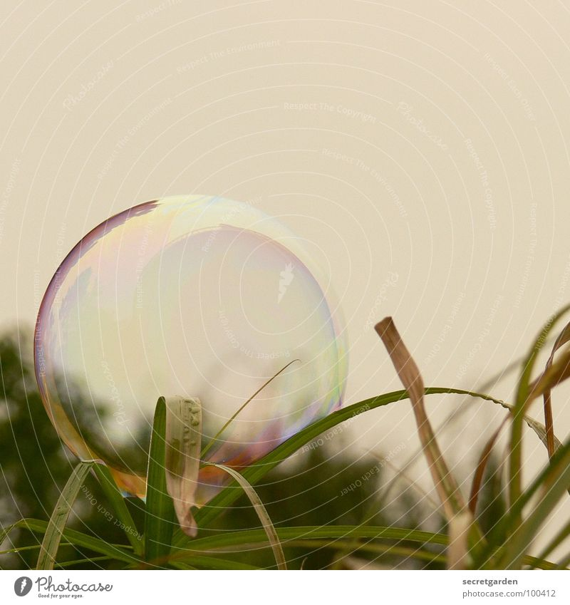soap bubble Soap bubble Bushes Green Grass Dark Transparent Reflection Playful Romance Nature Meadow Balcony Dazzling Playing milky Sky regenerative Detail