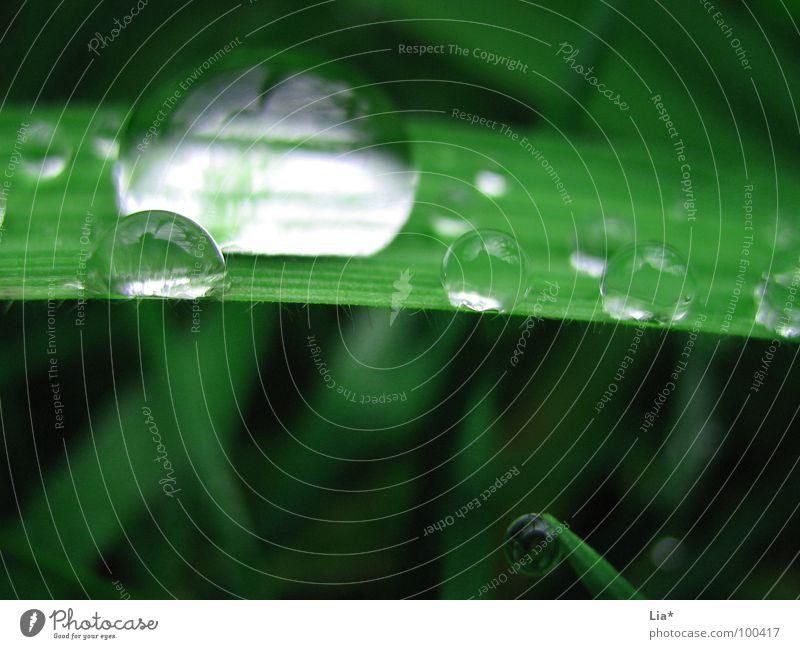 Nature Green Water Meadow Grass Rain Drops of water Wet