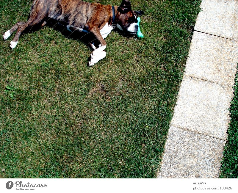 Dog Animal Relaxation Break Serene To feed Pet Mammal Boxer Animal shelter Dog food Gorged