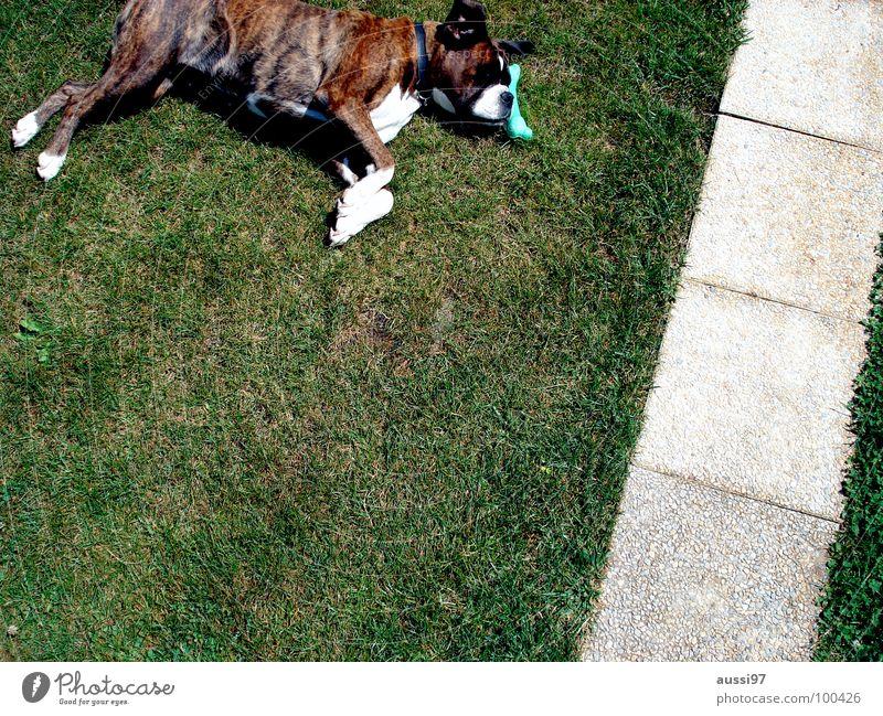 Have a break, have a bone. Dog Break Dog food Animal Serene Relaxation Gorged To feed Pet Animal shelter Mammal Boxer lying dog take five Take 5