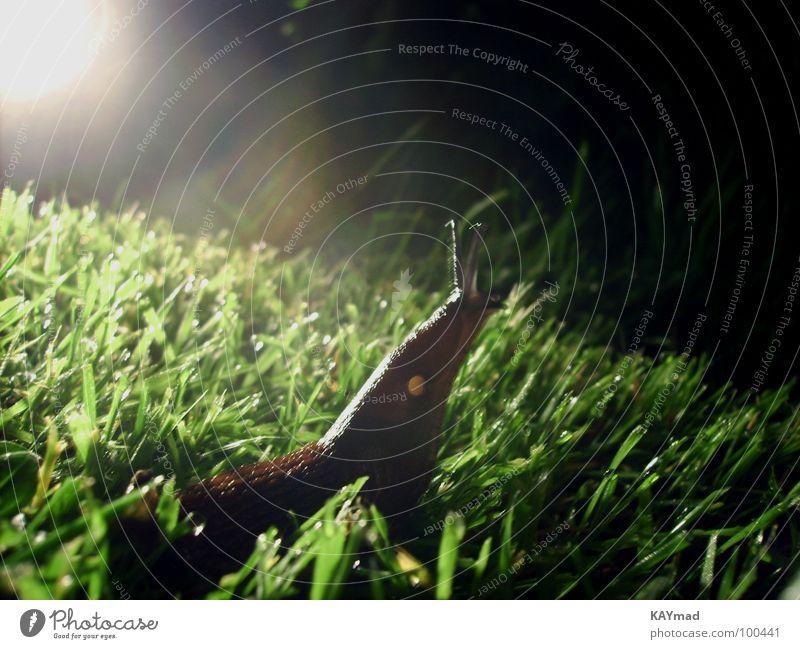 giraffe or snail? Night Back-light Meadow Grass Wet Curiosity Calm Serene Timeless Macro (Extreme close-up) Close-up Snail Garden Interest Freedom Exterior shot