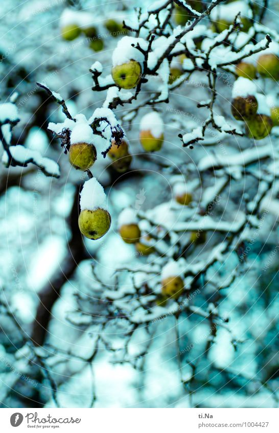 Nature Green White Tree Calm Winter Cold Yellow Snow Small Healthy Time Garden Ice Growth Wait