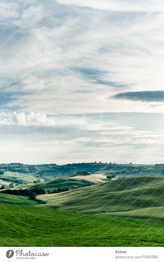 Tuscany as Tuscany can Vacation & Travel Tourism Trip Environment Nature Landscape Plant Sky Clouds Sunlight Summer Beautiful weather Foliage plant Field Hill
