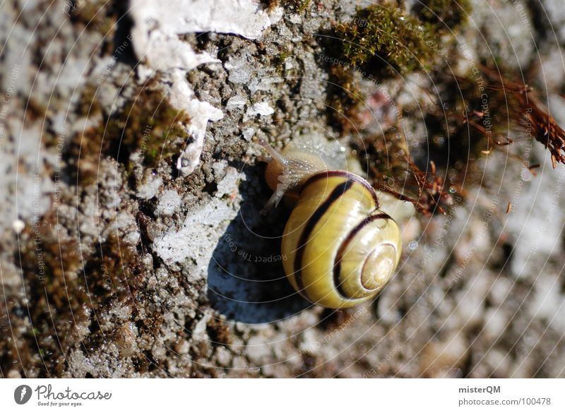 On My Way Speed Macro (Extreme close-up) Slowly High speed Calm Backwards Snail House (Residential Structure) Possessions Sweet Garden Park Floor covering
