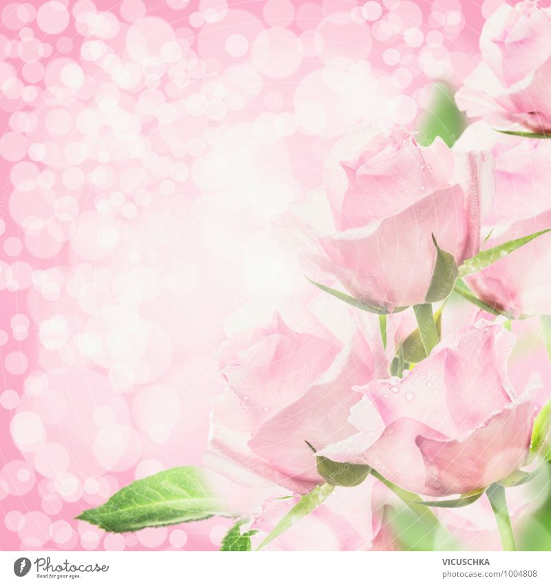 Pink Roses in Bokeh Light Style Design Summer Feasts & Celebrations Valentine's Day Mother's Day Wedding Birthday Nature Plant Flower Bouquet Jump Soft