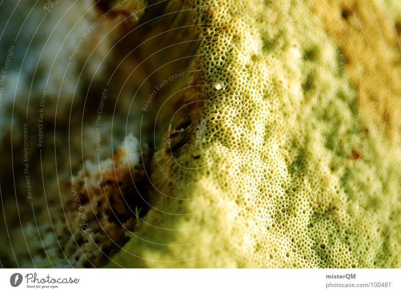 Edible. Feed Delicious Green Yellow Macro (Extreme close-up) Edge Brown Gastronomy Mushroom Nature wallpapers Sponge Structures and shapes Near spongy Food