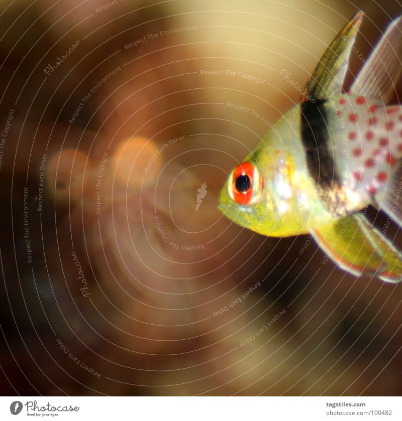 Water Ocean Red Black Yellow Bright Fear Glittering Fish Point Under Panic Water wings Animal Illumination Awareness