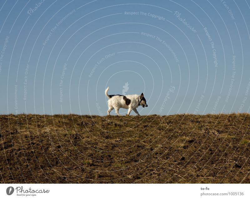 stroll Nature Landscape Sky Cloudless sky Beautiful weather Meadow Animal Pet Dog 1 Movement Going Walking Trust Safety Prompt Serene Calm Wisdom Modest Thrifty