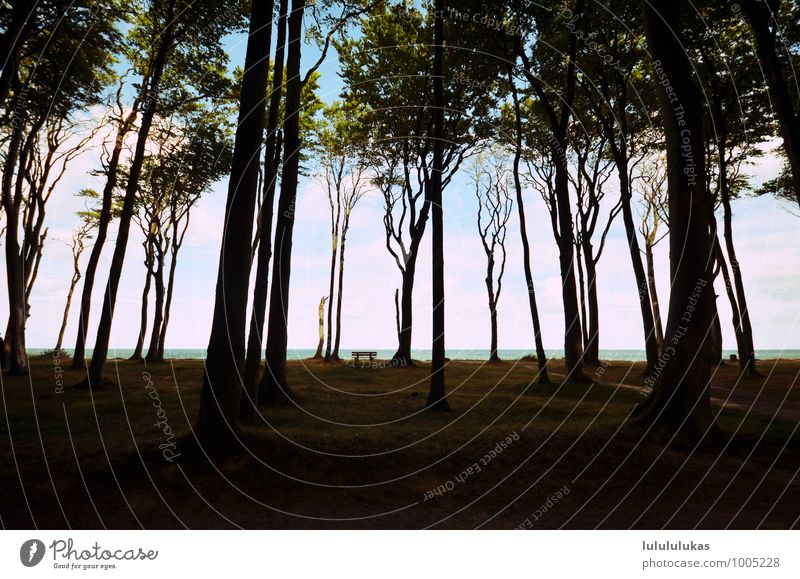 It's in the woods. Vacation & Travel Nature Sky Tree Grass Forest Breathe Contentment Longing Relaxation Bench Stop short To go for a walk Freedom Calm