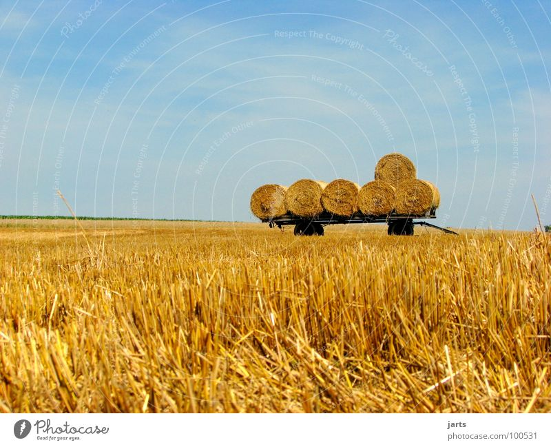 """6"" Hay bale Bale of straw Field Cornfield Agriculture Work and employment Closing time Organic farming Summer Transport Harvest grain Americas Sky Followers"