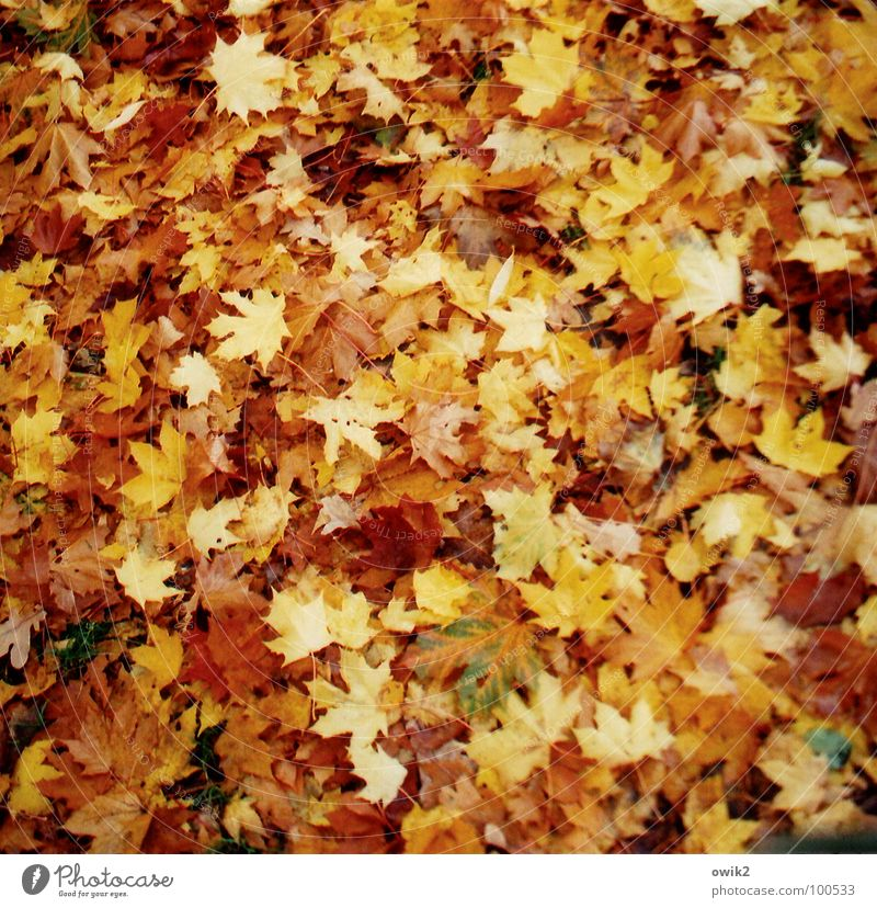 Nature Plant Red Leaf Environment Yellow Sadness Autumn Meadow Together Lie Earth Idyll Gold To enjoy Climate