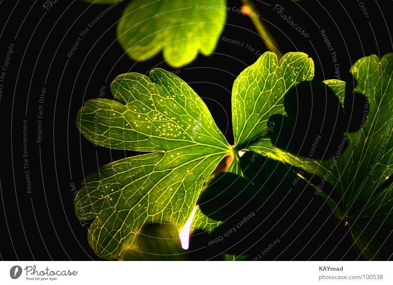 Green Calm Dazzle Vessel