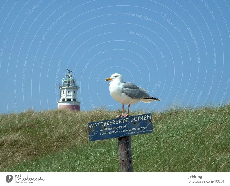 idyllic Ocean Lake Seagull Bird Lighthouse Grass Gull birds Iceland Sky Blue sky North Sea Beach dune landscape. blue sky Signs and labeling sea northsea Idyll