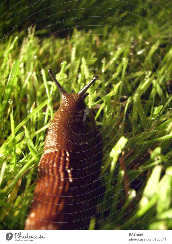 Calm Loneliness Meadow Grass Wet Disgust Snail Slimy