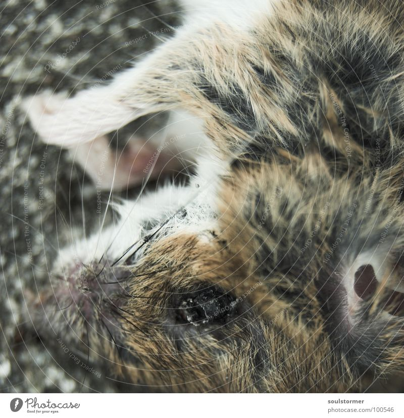 Animal Eyes Death Life Hair and hairstyles Small Wet Nutrition Nose Cute Transience Ear Pelt Mouse Paw Mammal