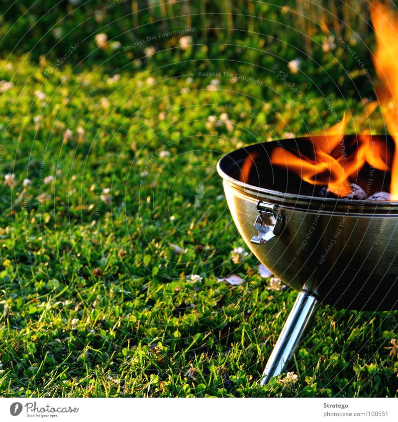 Green Summer Meadow Warmth Grass Wood Lake Blaze Nutrition Fire Physics Hot Sphere Dinner Flame Barbecue (apparatus)