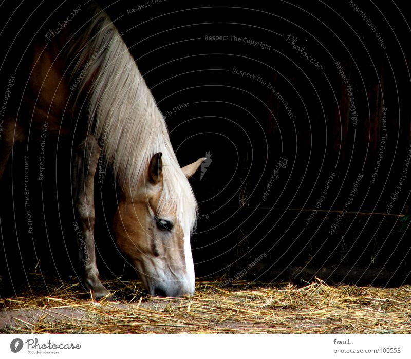 Animal Horse Kitsch Farm Appetite To feed Mammal Muzzle Straw Barn Mane Pipe dream Country life Bedding