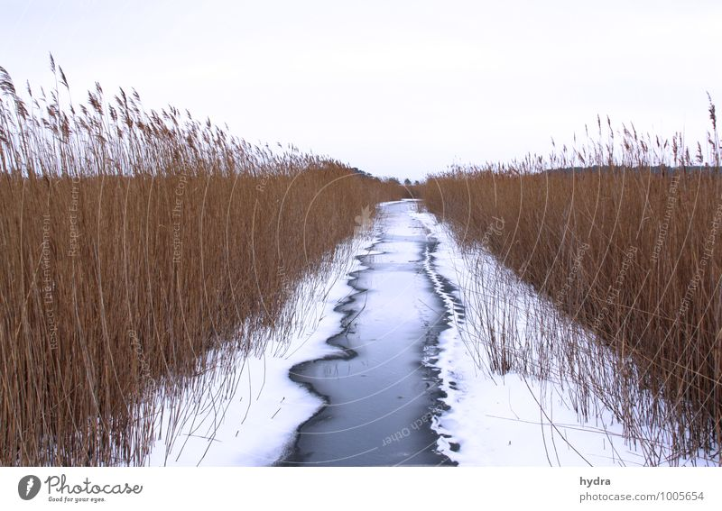 Winter road clearance along the waterway Vacation & Travel Trip Far-off places Snow Winter vacation Break Water Ice Frost Common Reed Marsh grass Marsh plant