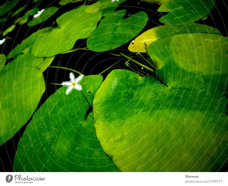 Water Beautiful Flower Green Plant Black Loneliness Dark Cold Blossom Spring Garden Lake Drops of water Rose Clarity