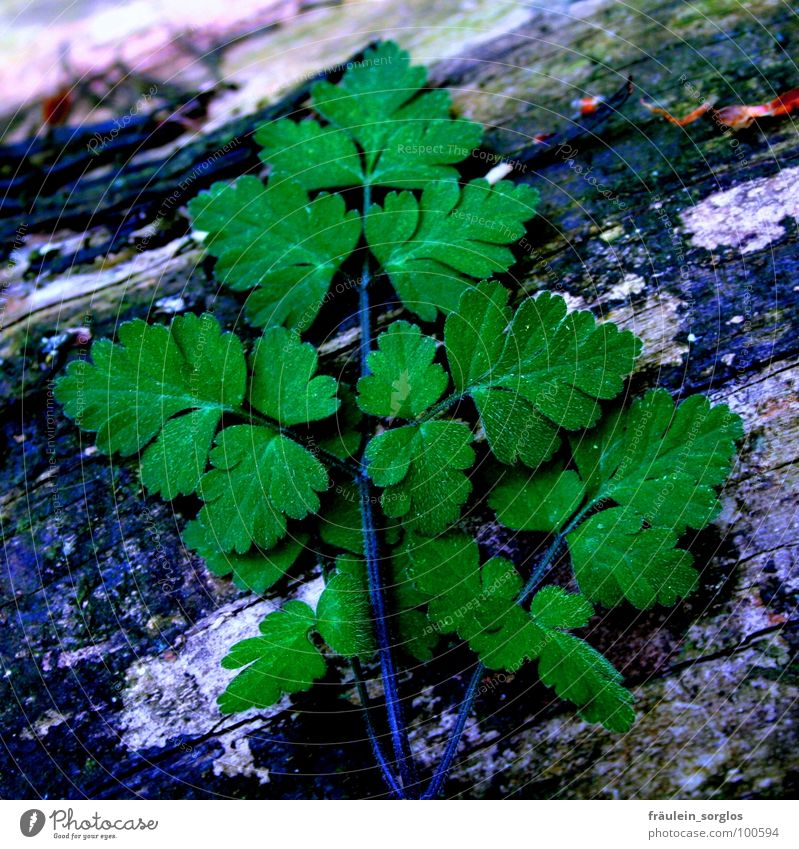 green leaf on dark ground Green Tree trunk Plant Maturing time Nature Life Growth