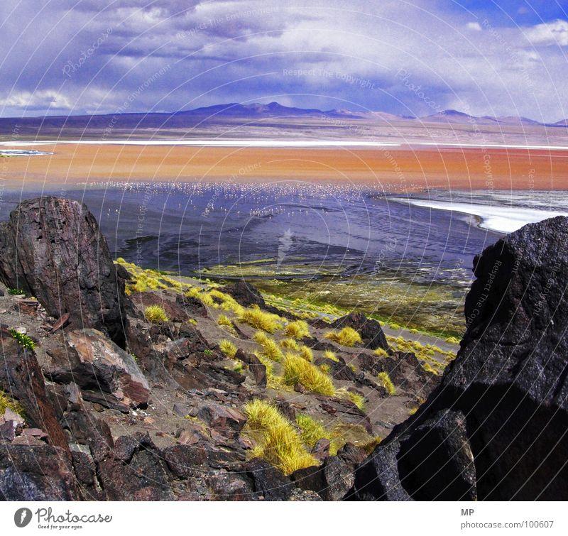 Flamin Goland Flamingo Grass Red Bolivia Salar de Uyuni Tourism Extraterrestrial Phenomenon South America Impressive Exceptional Open Fantastic Stone Minerals