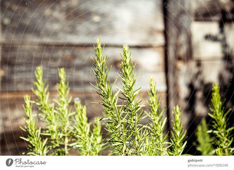RosMari(n) Healthy Alternative medicine Healthy Eating Wellness Harmonious Senses Calm Fragrance Elements Summer Beautiful weather Plant Agricultural crop