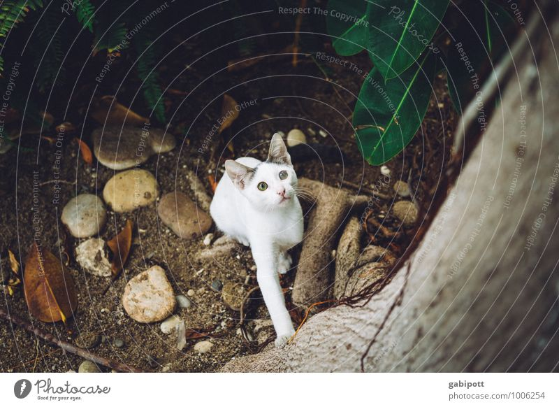 Cat Animal Brown Moody Jump Free Sit Perspective Tall Observe Threat Cute Adventure Curiosity Discover Concentrate
