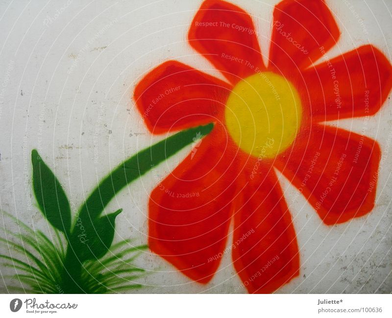 Old Flower Green House (Residential Structure) Colour Wall (building) Orange Art New Culture
