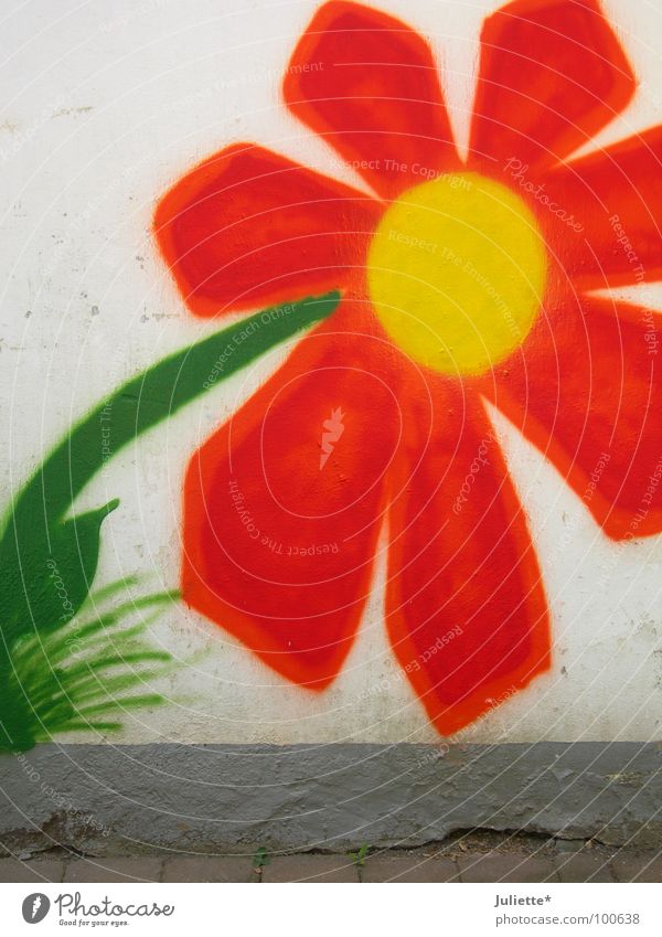 House flower II Wall (building) Flower Beautiful Multicoloured Green Yellow Old New Colour Orange