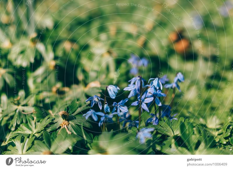 Nature Plant Green Flower Environment Warmth Meadow Spring Garden Park Fresh Happiness Friendliness Violet Anticipation Spring fever