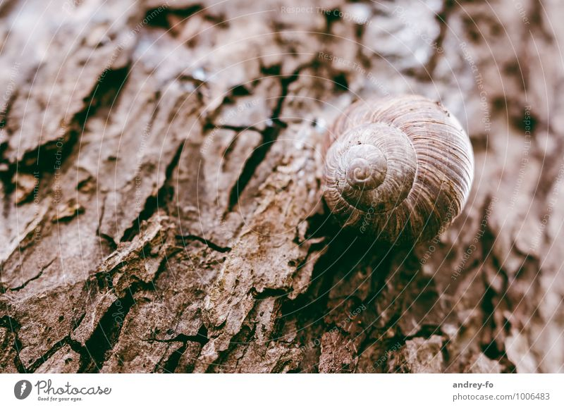 snail Environment Nature Animal Summer Plant Tree Snail 1 Old Slimy Wild Brown Senior citizen Loneliness Target Wood Tree bark Dry Sleep Death Round sticking
