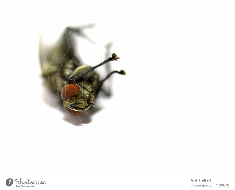 Death Fly Flying Lie Annoy Bothersome