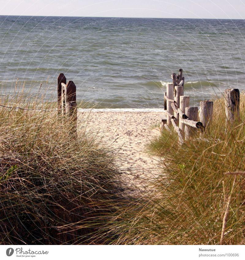 To the beach Beach Ocean Coast Calm Relaxation Baltic Sea Nature Lanes & trails