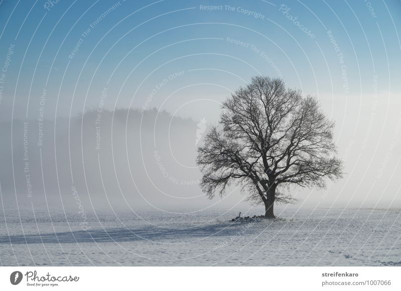 Single tree on snowy field in ground fog and sunshine Winter vacation Hiking Agriculture Forestry Landscape Plant Sun Beautiful weather Fog Snow Tree Field